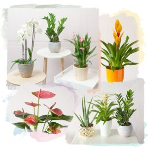 Plant Lovers Choice